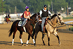 LOUISVILLE, KY -MAY 28: Bravazo, ridden by Danielle Rosier, prepares to train at Churchill Downs, Louisville, Kentucky, accompanied by trainer D. Wayne Lukas on pony. (Photo by Mary M. Meek/Eclipse Sportswire/Getty Images)