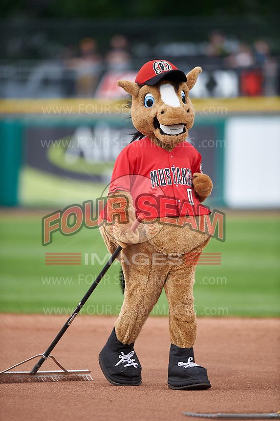 Billings Mustangs mascot Homer helps rake the field between innings of a Pioneer League game against the Grand Junction Rockies at Dehler Park on August 14, 2019 in Billings, Montana. Grand Junction defeated Billings 8-5. (Zachary Lucy/Four Seam Images)