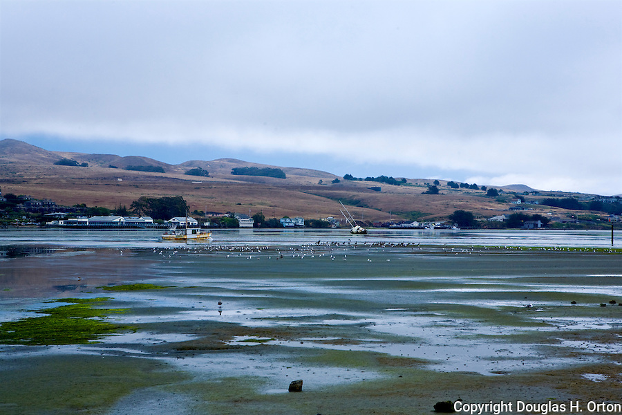 North of Bodega Bay along the California coastline and famous U.S. Highway 1 lie many wonderful beach accesses, headlands, and state parks along with pastoral and mountain views inland.