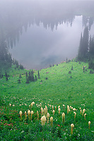 Beargrass above Twin Lakes<br /> Jewel Basin Hiking Area<br /> Flathead National Forest<br /> Rocky Mountains,  Montana