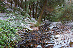 Snowy Bussey Brook at the Arnold Arboretum in the Jamaica Plain neighborhood, Boston, Massachusetts, USA