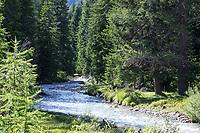 Gebirgsbach, im Bergwald, Nadelwald, Fichtenwald, Gebirgs-Bach, naturnaher Bach, Waldbach, Wasser, Bach, Alpen, Kärnten, Österreich, Austria, alp, alps