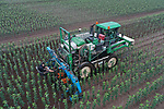 Foto: VidiPhoto<br /> <br /> STRAMPROY – Personeel van Boomkwekerij Fleuren uit Baarlo vrijdag aan het werk op een boomperceel bij Stramproy. Met een speciale machine wordt tussen de jonge appelbomen mechanisch geschoffeld. Omdat het hier biologisch fruitbomen bestreft, mogen hiervoor geen bestrijdingsmiddelen worden gebruikt. Fleuren heeft twee schoffelmachines voor ongeveer 120 ha. aan jonge fruitbomen.