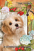 Isabella, REALISTIC ANIMALS, REALISTISCHE TIERE, ANIMALES REALISTICOS, paintings+++++,ITKE066175-L,#a#, EVERYDAY ,dogs ,collage