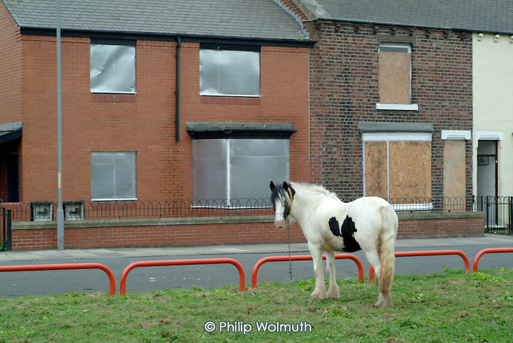 A horse grazes on waste ground in front of boarded up empty and vandalised terraced housing, scheduled for probable demolition, in a low demand area of South Bank, Middlesborough.
