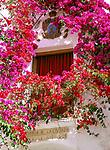 Spanien, Andalusien: Fenster umrahmt von bluehender Bougainvillea | Spain, Andalusia: Window Box in Bougainvillea