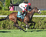 Stephanie's Kitten (no. 9), ridden by Hohn Velazquez and trained by Chad Brown, wins the 37th running of the grade 1 Flower Bowl Invitational Stakes for fillies and mares three years old and upward on September 27, 2014 at Belmont Park in Elmont, New York.  (Bob Mayberger/Eclipse Sportswire)