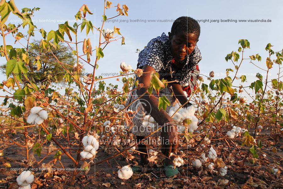 TANZANIA, woman harvest cotton by hand picking / TANSANIA, Frau erntet Baumwolle per Hand Pflueckung
