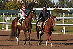 Royal Delta with Mike Smith upon post parade before the Sabin Stakes (G3) at Gulfstream Park. Hallandale Beach Florida. 02-17-2013