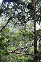 The Rainforests of Iron Range National Park, Queensland