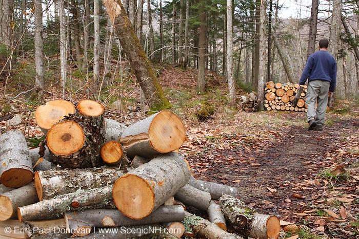 Man stacking freshly cut hardwood in New Hampshire USA