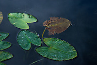 """STAGES OF LIFE""<br />