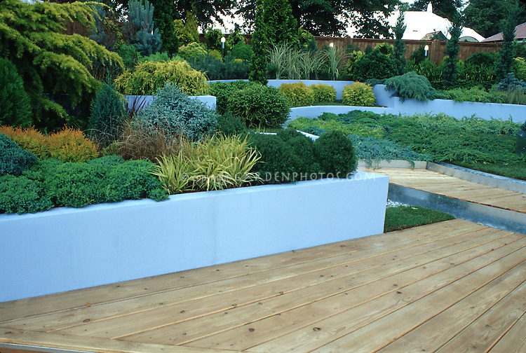 Raised beds of conifers shrubs, deck, evergreens mixed landscaping, green walls, deck and privacy fence backyard, blue and green color theme
