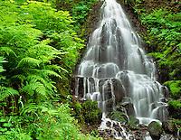 Fairy Falls, Columbia River Gorge National Scenic Area, Oregon.