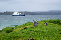 Yellow-eyed Penguin (Megadyptes antipodes) on Enderby Island in the Aukland Islands, New Zealand with the expedition cruise ship Spirit of Enderby at anchor in the background.