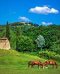 Italien, Toskana, Provinz Siena: Azienda (Pferdezucht) im Valle d'Orcia | Italy, Tuscany, Province of Siena: Azienda (horsebreeding) at Valle d'Orcia