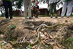 Yellow Anaconda or Paraguayan Anaconda (Eunectes notaeus). Porto Joffre Hotel on the banks of the Cuiaba River, Northern Pantanal, Brazil.