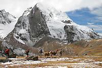 Vallée Sacrée, Machu Picchu (2450 m), Cordillera Vilcanota (4800 m à 5200 m)...