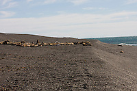 Sea Lions in Punta Norte beach in Peninsula de Valdez Patagonia Argentina