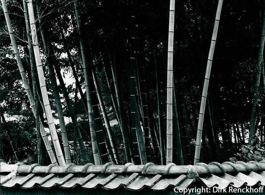 Bambus bei Tempel in Kyoto, Japan