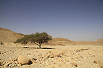 Nahal Raham in Eilat mountains