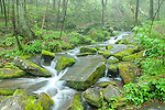 Roaring Fork, Great Smoky Mountains National Park, Tennesee, USA