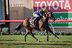 DEL MAR,CA-SEPTEMBER 05: With Honors,ridden by Flavien Prat,wins the Del Mar Juvenile Fillies Turf at Del Mar Race Track on September 05,2016 in Del Mar,California (Photo by Kaz Ishida/Eclipse Sportswire/Getty Images)