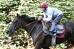 Goldikova training in Chantilly - France before 2009 Breeder's cup. Goldikova beat males in winning the 2008 Breeders' Cup Mile at Santa Anita Park in California and was a finalist for the Eclipse Award's American Champion Female Turf Horse for 2008.