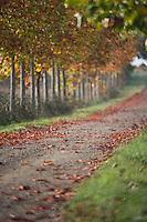 Europe/France/Aquitaine/40/Landes/Nauton:Allée bordée d'arbres