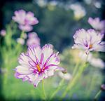 9.6.13 - Blooming….