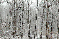 Snow covered landscape in Louisa County, VA. Photo/Andrew Shurtleff