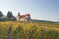 France, Alsace, Bas-Rhin, 67, Dambach-la-Ville, la chapelle Saint-Sébastien au milieu du vignoble en automne // France, Alsace, Bas-Rhin, Dambach-la-Ville, the chapel St Sebastien in the vineyard in autumn