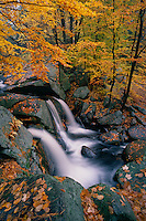 Trap Falls<br />   and American beech<br /> Willard Brook State Forest<br /> Massachusetts