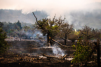 SEP 28 CA: Cluster Of Destructive Wildfires Burn in Napa And Sonoma Counties - California