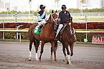 Capo Bastone wins allowance race at Gulfstream Park. Hallandale Beach Florida. 02-16-2013