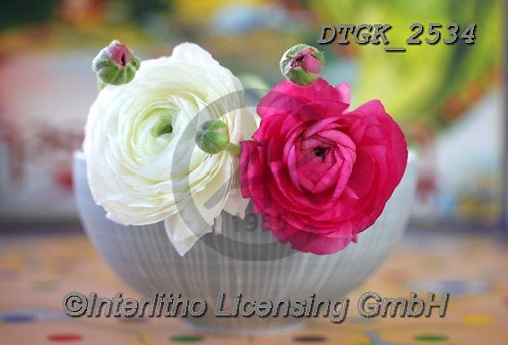 Gisela, FLOWERS, BLUMEN, FLORES, photos+++++,DTGK2534,#f#, EVERYDAY