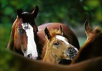 Paint Horses.