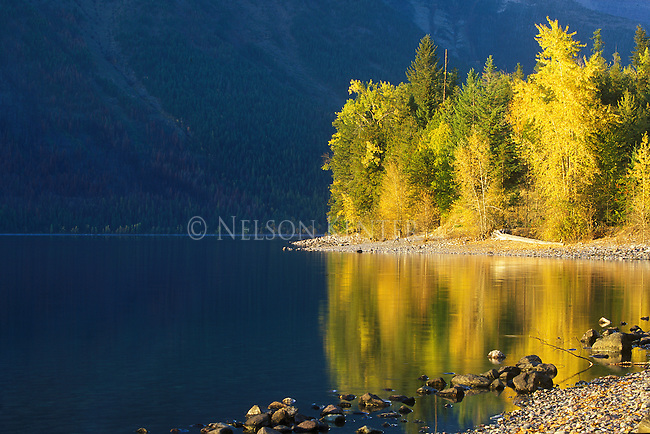 Lake MacDonald shore line with fall color  in Glacier National Park