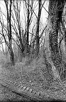 Palude di Brivio (Lecco) lungo il fiume Adda. Alberi e segno di pneumatico nella terra --- Swamp of Brivio (Lecco) along the river Adda. Trees and sign of a tire in the ground