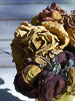Dried flowers<br />