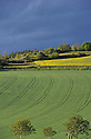 13/05/14 - CEZALIER - PUY DE DOME - FRANCE - Cultures cerealieres et oleagineuses au pied du Pic d Ysson - Photo Jerome CHABANNE