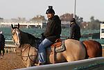 Trainer Steve Assmussen..October30, 2011.