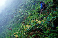 Searching for rare native plants on the slopes below Alakii Wilderness Preserve, Kauai.