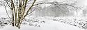 Winter scene with birch tree, Stanton Moor, Peak District National Park, Derbyshire. Digitally Stitched Panorama.