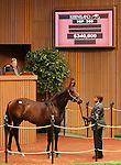 Hip #360 Candy Ride - Street Talk colt at the Keeneland September Yearling Sale.  September 11, 2012.