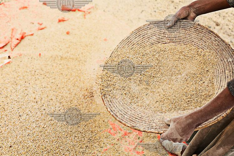A man winnowing weat seed.