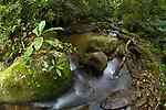 Rainforest stream. Mid-altitude montane forest, Ranomafana NP, south east Madagascar.
