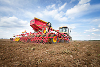 Drilling biofumigant after vining peas in preparation for potatoes to reduce PCN - August, South Lincolnshire