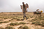 Donkey (Equus asinus) carrying gear being pulled by Somali frankincense harvester, Hawf Protected Area, Yemen