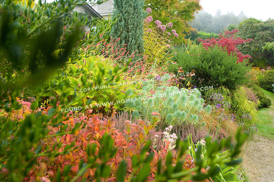 For the past several seasons, this Seattle-area garden designer has decided to slowly replace her water and labor-intensive annual and tender perennial beds with hearty, foliage-oriented perennials.  Now several years old, the beds have matured and filled in nicely, and provide low-maintenance, year-round interest.  In the fall, yellow, golden orange, and red hues take the place of showy flowers, while dramatic shapes keep the eye moving left, right, up, and down.